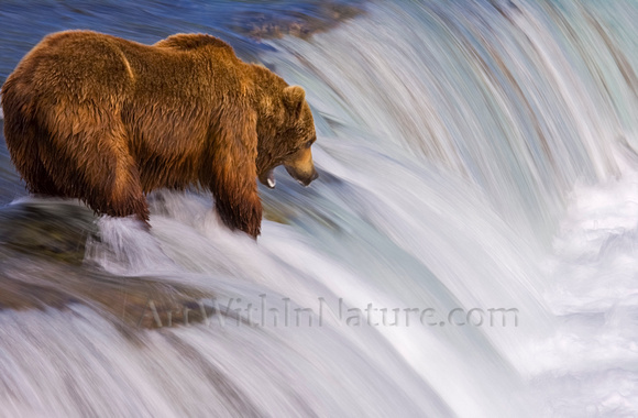 "grizzly, bear, Brooks, Falls, Katmai, National, Park, salmon,Alaska,""grizzly bear"",""brooks camp"",photography"